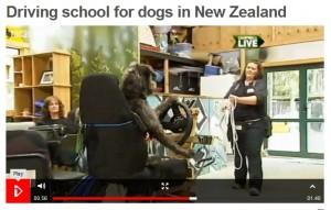 bbc_dogs-300x191